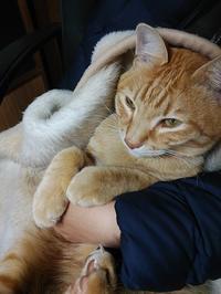 抱っこ猫 - すみやのひとり言・・・