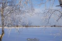 2019樹氷 - White Love