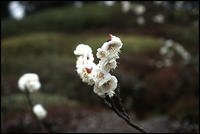 六義園-32 - Camellia-shige Gallery 2