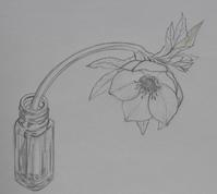 切花スケッチ - 絵と庭