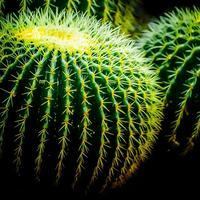 ・round cactus・ - - Foliage & Blooms Foto -