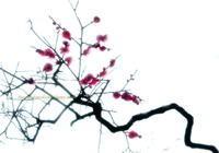 ひにくれもの - 花々の記憶