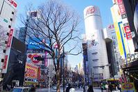 2月12日㈫の109前交差点 - でじたる渋谷NEWS