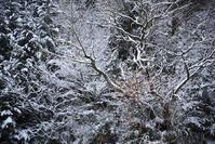 冬の息吹 - 詩輝彩物語