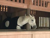お伊勢さんに参りました。「めったに出会えないお馬さんと御対面!!」編 - ドライフラワーギャラリー⁂ふくことカフェ