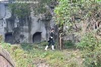 2018年11月成都大熊猫繁殖研究基地その19陽ちゃんの笹タイム - ハープの徒然草