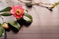 寒椿✨ - Bouquets_ryoko