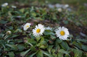 ちょっとずつ春に向かって - フィレンツェ田舎生活便り2