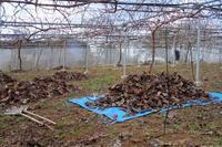 落ち葉集め - ~葡萄と田舎時間~ 西田葡萄園のブログ