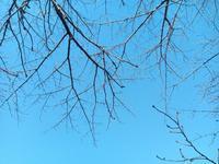 2月のSORA YOGA - Studio Forest