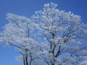 霧氷の花咲く英彦山 -