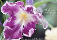 失敗しないレンズか、失敗するけどたまに息を呑むレンズか、それが問題なのよさ。sony α7RIII + FE 24-105mm F4 G OSS(SEL24105G) 実写 #花のある生活 - 東京女子フォトレッスンサロン『ラ・フォト自由が丘』-写真とフォントとデザインと現像と-