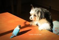 B.B & Chipo*息がかかるほどそばに・・ - FUNKY'S BLUE SKY