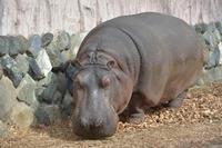 落ち葉のベッド - 動物園へ行こう