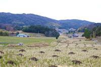 #54 そばカフェ生田村 - チッキィのおいしい淡路島