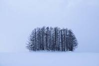 雪煙る日のマイルドセブンの丘~2月の美瑛 - My favorite ~Diary 3~