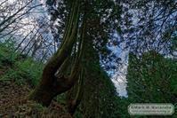 ハンドパワーの木 - Mark.M.Watanabeの熊本撮影紀行