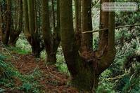ハンドパワーの木-2 - Mark.M.Watanabeの熊本撮影紀行
