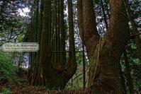 ハンドパワーの木-3 - Mark.M.Watanabeの熊本撮影紀行