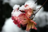 春待ち - Yoshi-A の写真の楽しみ
