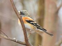 鳥たちの大集合 - Naturfreude