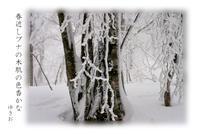 冬山路その⑰ - ゆきおのフォト俳句