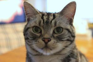 miu造さん - クスッと猫ズ生活