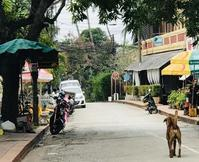ルアンパバーン旅行記ラオスの犬たち - Breeze in Malaysia
