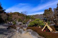 冬牡丹咲く當麻寺奥院 - 花景色-K.W.C. PhotoBlog