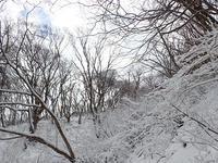 雪の三瓶山②*樹氷現る* - 清治の花便り