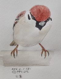 #スズメ 『雀』 Eurasian tree sparrow  #ネイチャー・ジャーナル - スケッチ感察ノート (Nature journal)