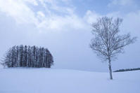 雪煙る日のマイルドセブンの丘Vol.2~2月の美瑛 - My favorite ~Diary 3~