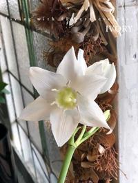 『 大失敗 』 -  Flower and cafe 花空間 ivory (アイボリー)