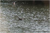 3回目のオシドリの池にて~最終回。 - 今日のいちまい