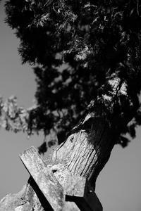 樹皮 - 節操のない写真館