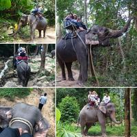 2/5 サムイ島観光は象と町、船と空港から… - ♪ミミィの毎日(-^▽^-) ♪