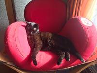 冬陽光と黒猫。 - 小樽BOTAマスの今夜もWHISKY