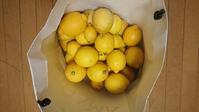最後のレモン収穫 - わたしのたからばこ