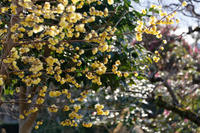石光寺の花たち - katsuのヘタッピ風景