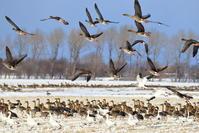 集まり始めています - 綺麗な野鳥たち