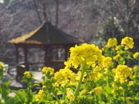 早めの春を感じます✿ - 神戸布引ハーブ園 ハーブガイド ハーブ花ごよみ