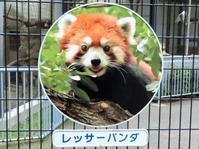 江戸川区自然動物園の旅行記を姉妹ブログ「レッサーパンダ紀行」にアップしました - (続)レッサーパンダ紀行
