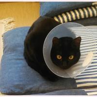 ワンちゃんもコンタクト👀✨ - きたのさと動物病院 | 札幌白石区・東区 | 一般診療・皮膚科・耳科