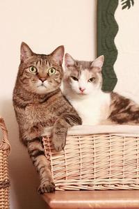 甘えたい猫と耐える猫 - きょうだい猫と仲良し暮らし