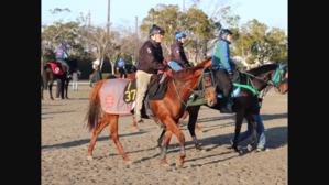 ミトロジー楽しみです/今週フェブラリーS藤田菜七子G1デビュー2018.2/15 - 馬主クラブの研究