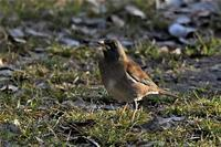 寒風吹く森の鳥さんたち・・・ - 鳥と共に日々是好日