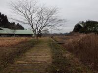 寒さの中の春のきざしは、、 - 千葉県いすみ環境と文化のさとセンター