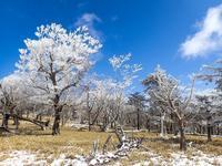 南台高の桃源郷から蒼穹霧氷の大台ヶ原 - 流雲 蒼穹 風に吹かれて