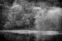 モノクロ風景戸隠鏡池 1 - 光 塗人 の デジタル フォト グラフィック アート (DIGITAL PHOTOGRAPHIC ARTWORKS)