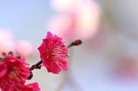 梅と鳥さんたち♪ - happy-cafe*vol.2